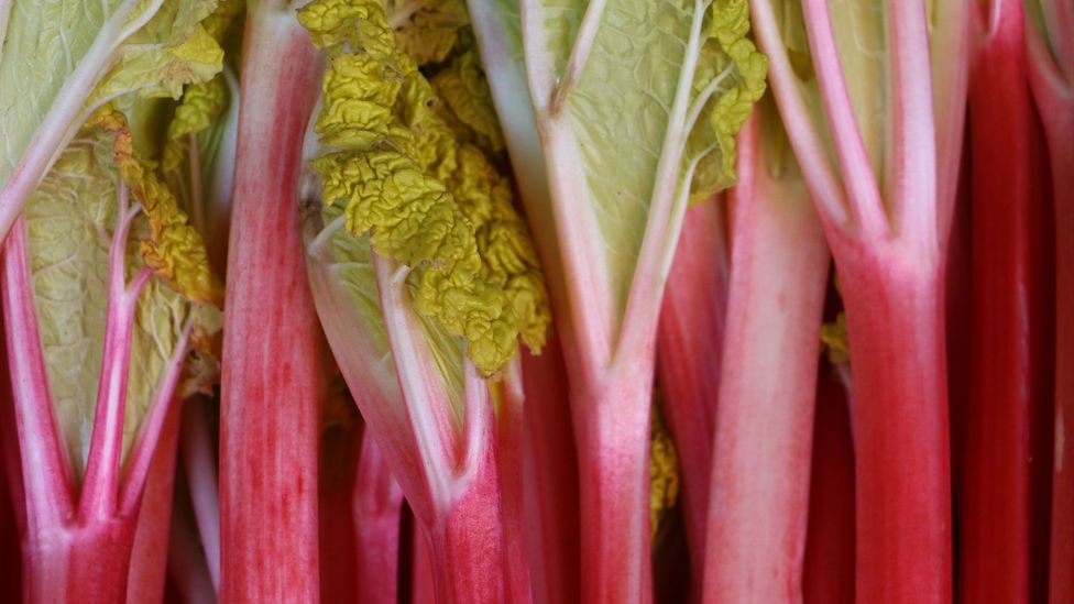 Rhubarb once commanded three times the price of opium and saffron (Credit: Mike MacEacheran)