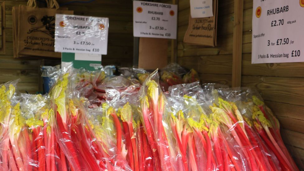 Forced rhubarb is far sweeter than the normal variety (Credit: Mike MacEacheran)