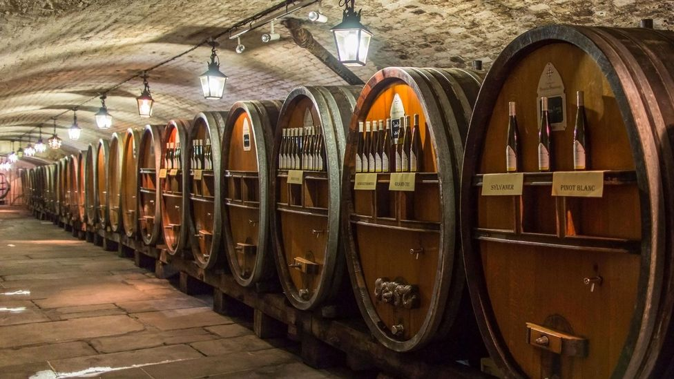 Today, the Cave Historique des Hospices de Strasbourg produces 140,000 bottles of wine a year (Credit: Garden Photo World/Alamy)