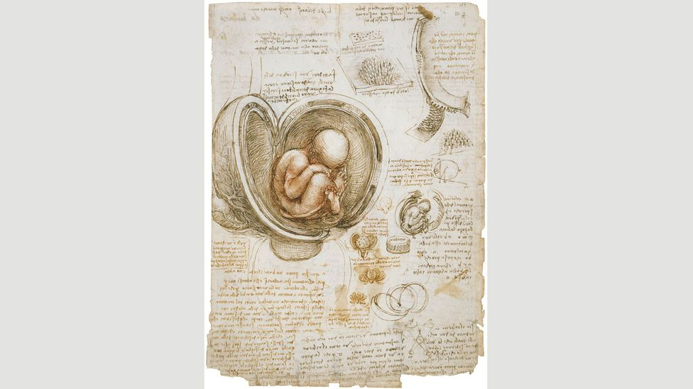 The foetus in the womb, c 1511: colour is usually absent in Da Vinci's anatomical studies, but in this drawing he used red chalk, stepping back from a purely mechanical approach