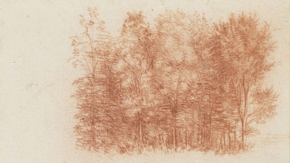 Da Vinci drew trees at the edge of a wood with a range of touch, the chalk sharpened or used broadly, and occasionally wetted on the artist's tongue to add density in the shadows