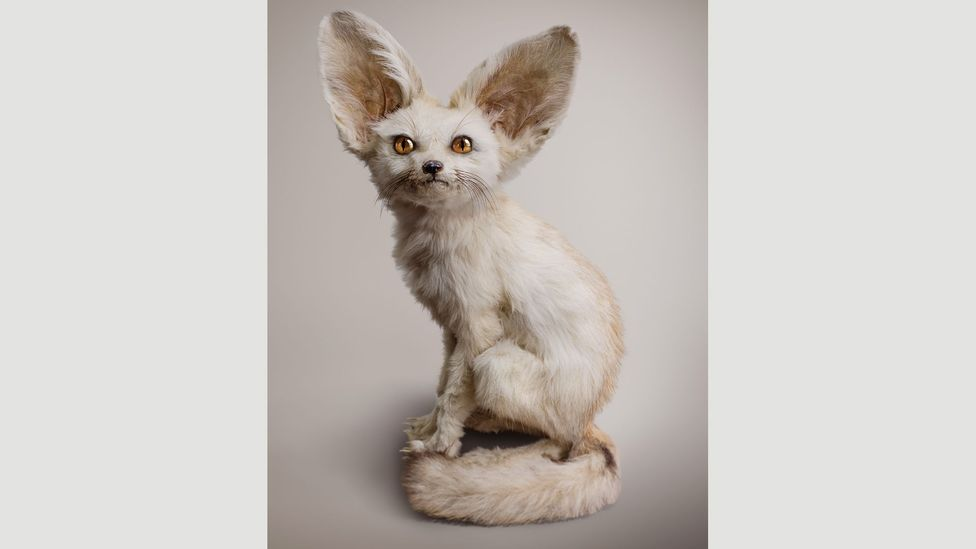 An imagined creature of artist Vincent Fournier: White Fennec (Zerdas hypnoticus), with the ability to access and control minds (Credit: Vincent Fournier)