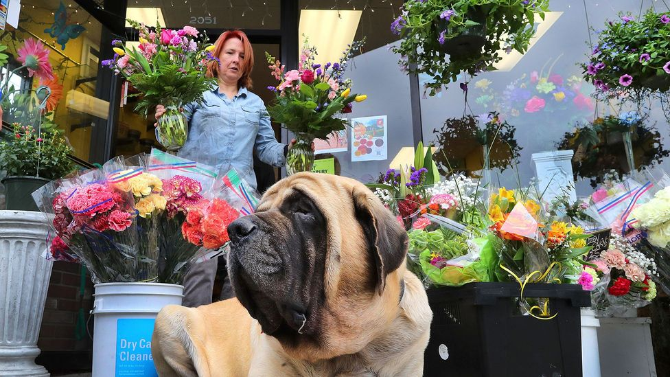 A flower shop owner in Boston readies her Mother's Day displays in 2018 (Credit: Getty Images)