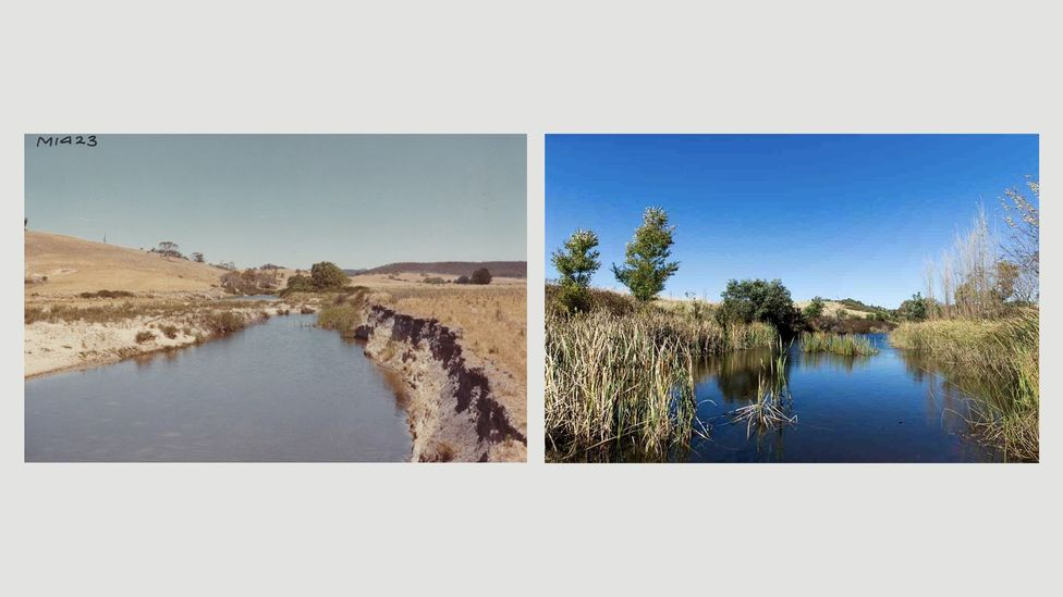 Mulloon Creek is shown before and after the adoption of natural sequence farming (Credit: Mulloon Institute)