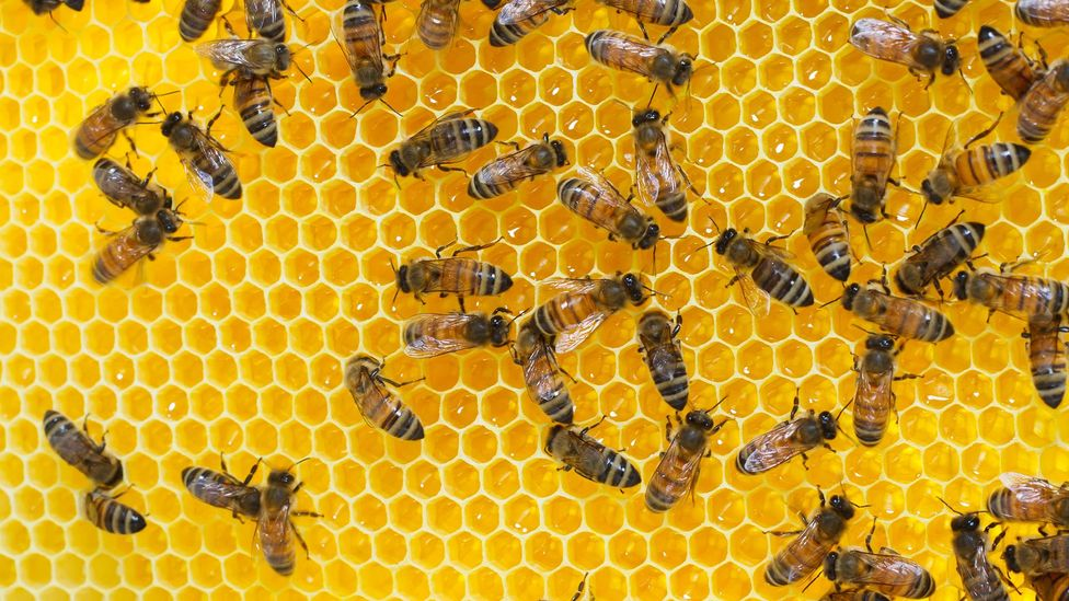 Honey has long been thought of as a way of lessening the severity of hayfever symptoms (Credit: Getty Images)