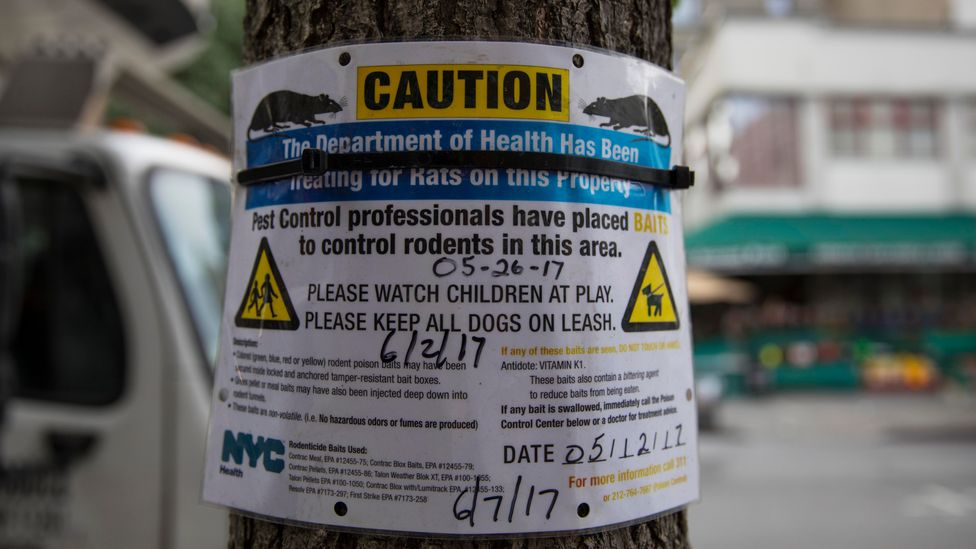 A health department notice above rubbish bags ripped open by rats in Brooklyn, New York (Credit: Getty Images)