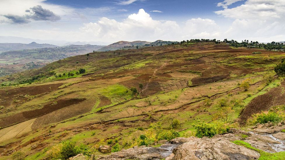 Today, only about 5% of Ethiopia is covered in forest, compared to around 45% about a century ago (Credit: Sarah Hewitt)
