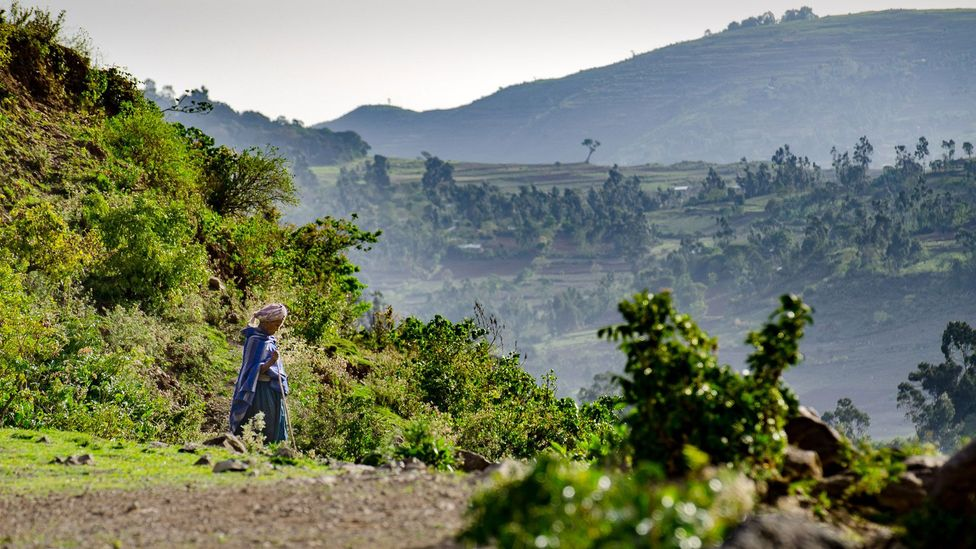 An Ethiopian woman descends back to the valley after visiting the church forest (Credit: Sarah Hewitt)