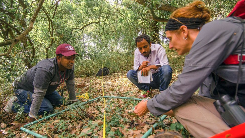 PhD student Amare Mekonnen (left), research assistant Misganaw Liyew and Dr Catherine Cardelús (right) have determined that shadow conservation works (Credit: Sarah Hewitt)