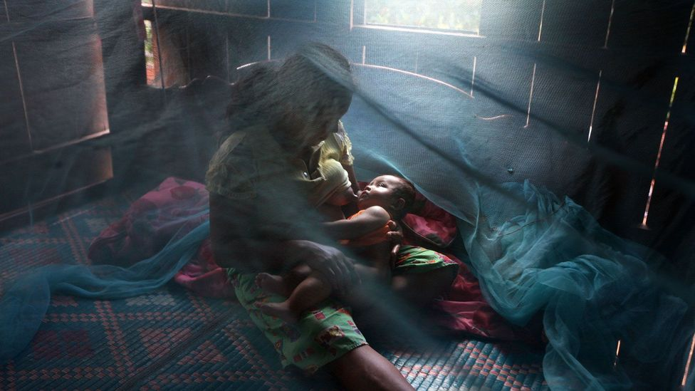 Mosquito nets are currently one of the best ways to prevent the spread of malaria (Credit: Getty Images)