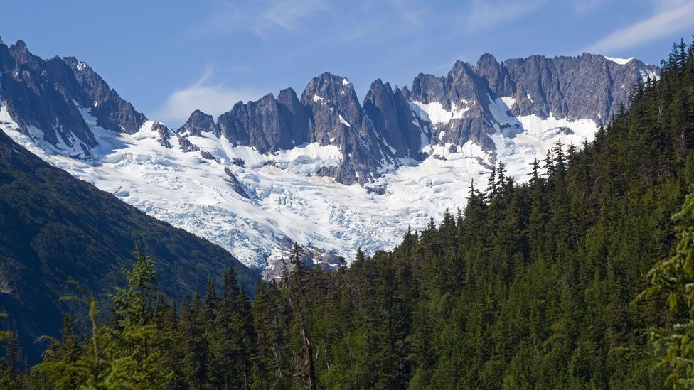 Skagway locals and visitors can collect spruce tips from the nearby forest and sell them to Skagway Brewing Co. for $5 per pound (Credit: imageBROKER/Alamy)
