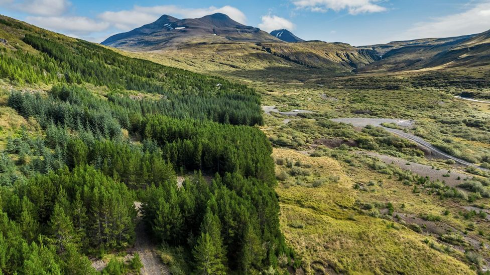 Respect for nature is important to the Ásatrú Association, which championed an effort to reforest parts of the country (Credit: ARCTIC IMAGES/Alamy)