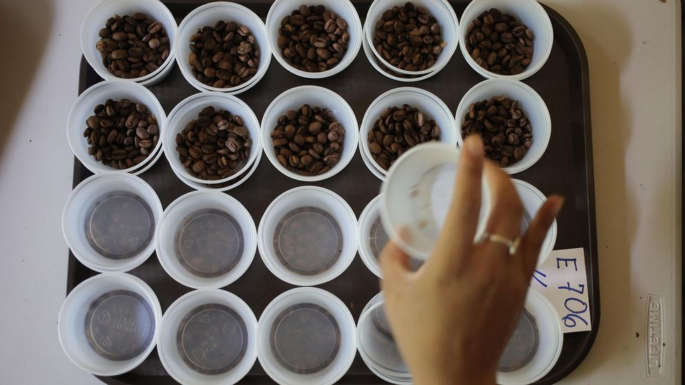 "Coffee bean samples are displayed at the international ""The Best of Panama"" competition (Credit: Alamy Stock Photo)"