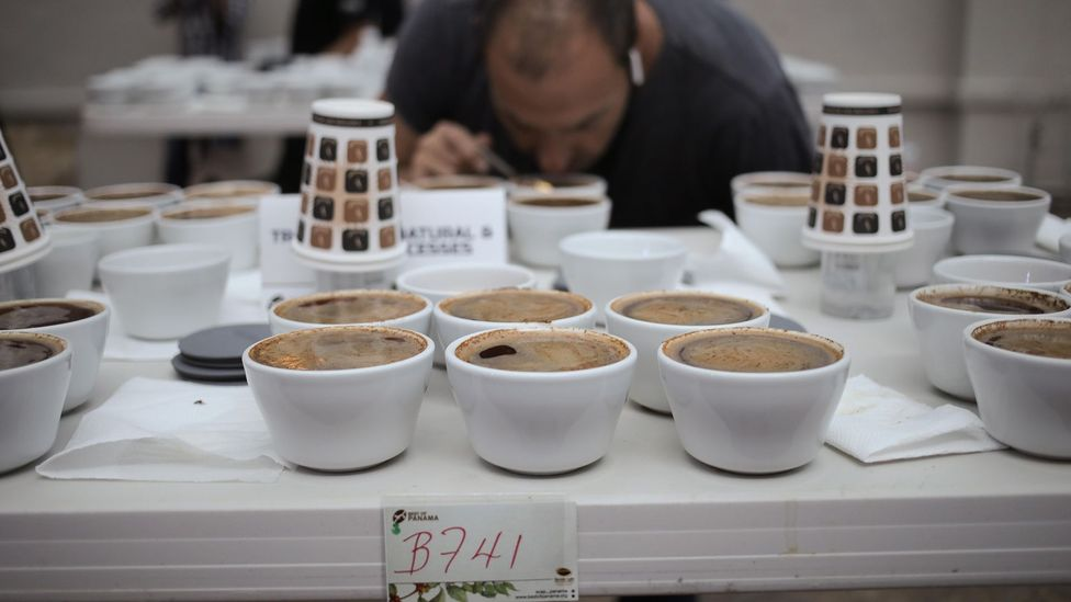 "A juror examines coffee entrants at ""The Best of Panama"" competition (Credit: Alamy Stock Photo)"