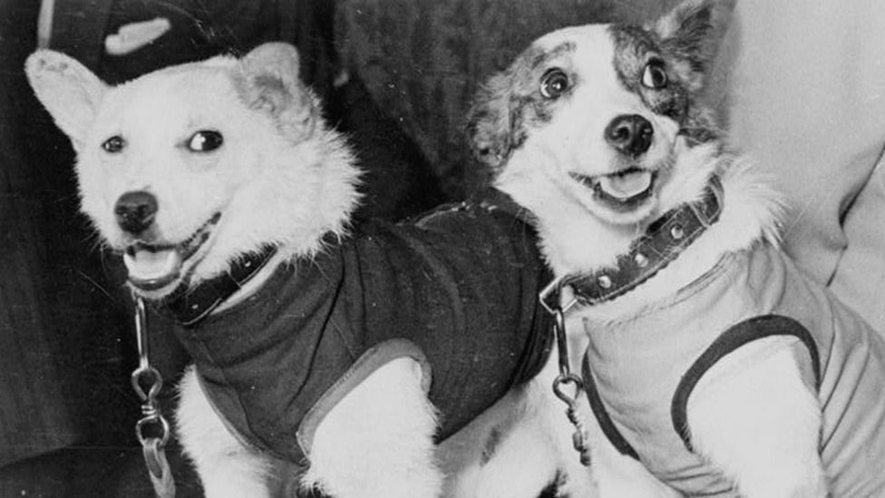 The Russian space dogs Belka and Strelka proved that animals could survive passing through the radioactive belts surrounding Earth (Credit: Getty Images)