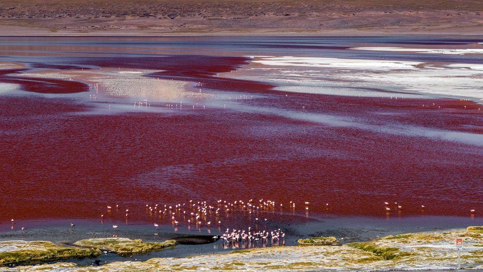 The Laguna Colorada (Red Lagoon) in Bolivia