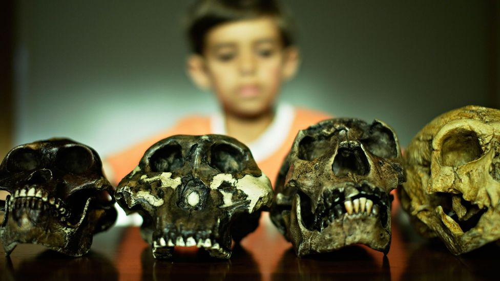 It is unlikely Homo sapiens would evolve again if we rewound time, but something similar would appear (Credit: Alamy)