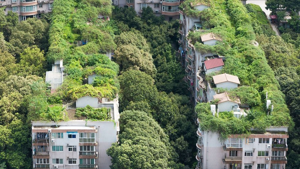 Lush vegetation helps to keep cities such as Chengdu, China, cool in summer (Credit: Getty Images)