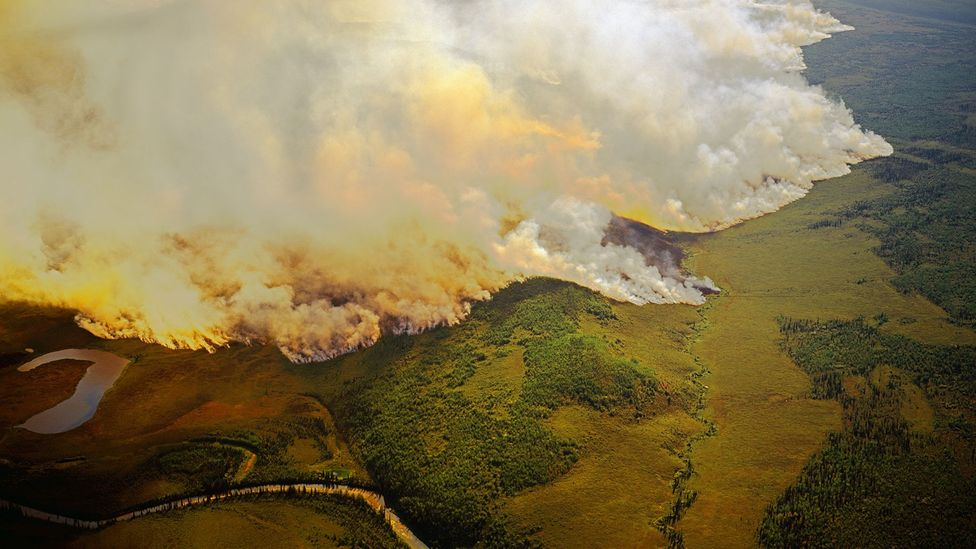 Huge amounts of carbon locked away in the trees, leaf litter and soil of Arctic forests are released into the atmosphere by fires (Credit: Alamy)
