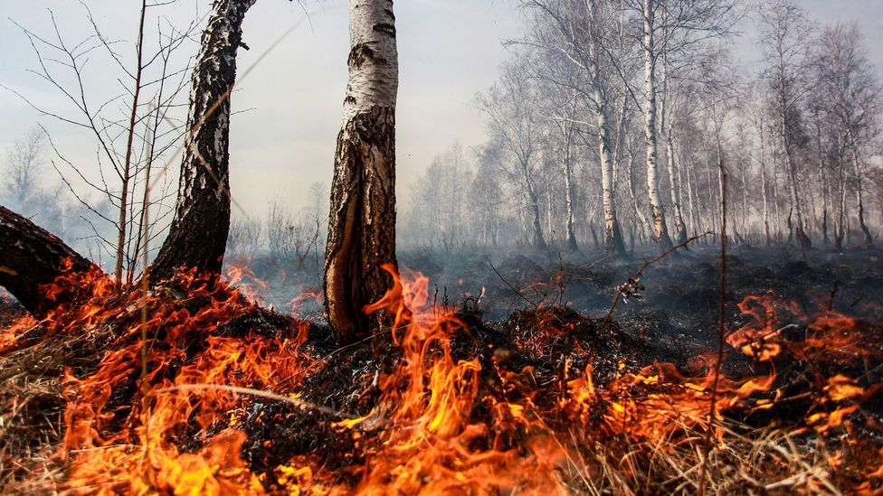 Rising temperatures in the arctic are leaving many areas more vulnerable to wildfires that can further increase the risk of global warming (Credit: Getty Images)