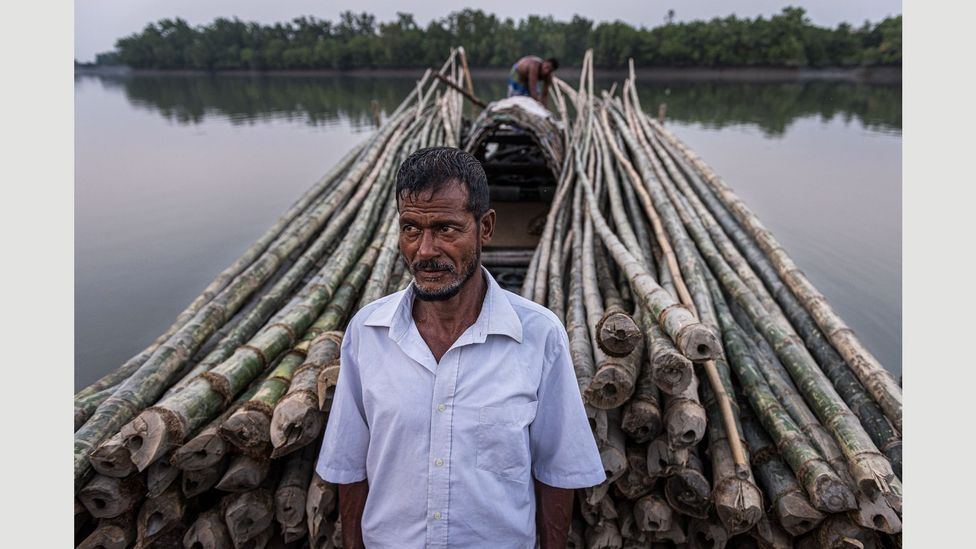 A villager stands in front of bamboo canes which will be used in construction (Credit: Ignacio Marin/ Institute)