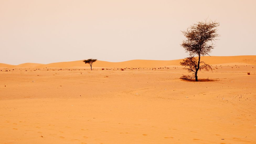 On the southern boundary of the Sahara, the Sahel is highly vulnerable to desertification (Credit: Getty Images)