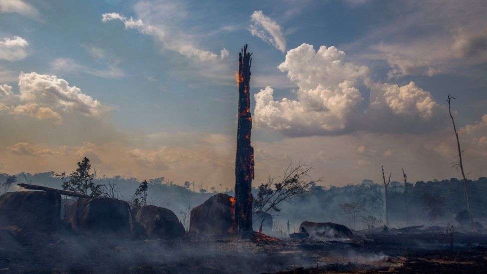 There have been more than 70,000 forest fires in the Brazilian Amazon in 2019 (Credit: Getty Images)