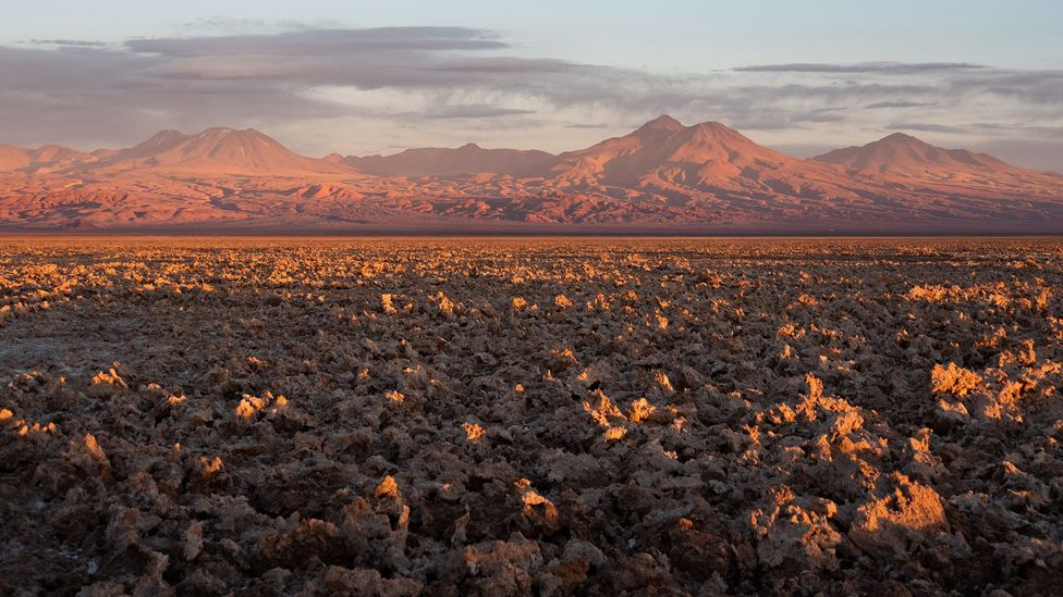 New species of bacteria are being unearthed in the Atacama desert that could help us fight back against the spread of drug resistant infections (Credit: Tom Garmeson)