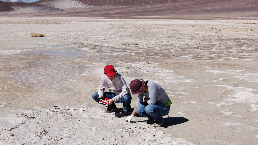"""Deserts like the Atacama and other extreme environments have become the focus of scientists who are """"bioprospecting"""" for potential new drugs (Credit: Cristina Dorador)"""