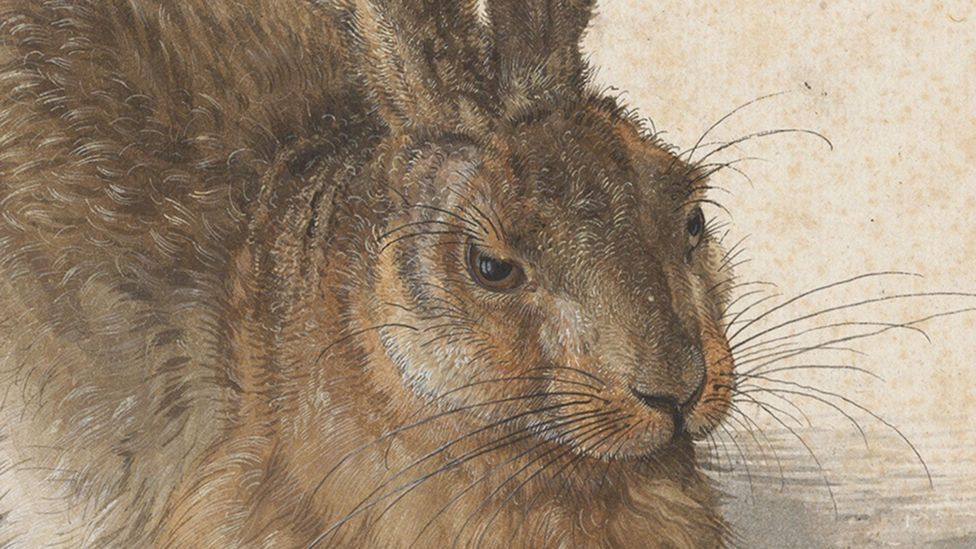 Detail of Young Hare – Albrecht Dürer (1502); in the hare's right eye, you can see the reflection of Dürer's studio window