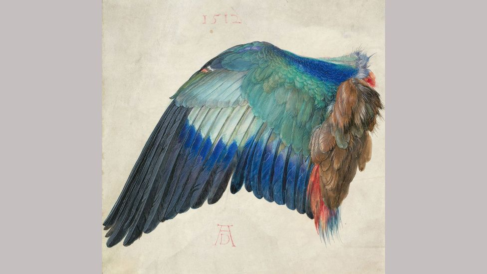 Wing of a Blue Roller – Albrecht Dürer (c1500); here, the wing is disembodied from the bird, taking up almost an entire sheet of parchment