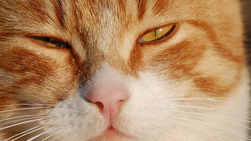 Slow blinking is a sign of affection from cats (Credit: Getty Images)