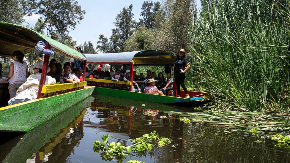 In Xochimilco's canals, many ride colourful wooden boats called trajineras (Credit: Megan Frye)