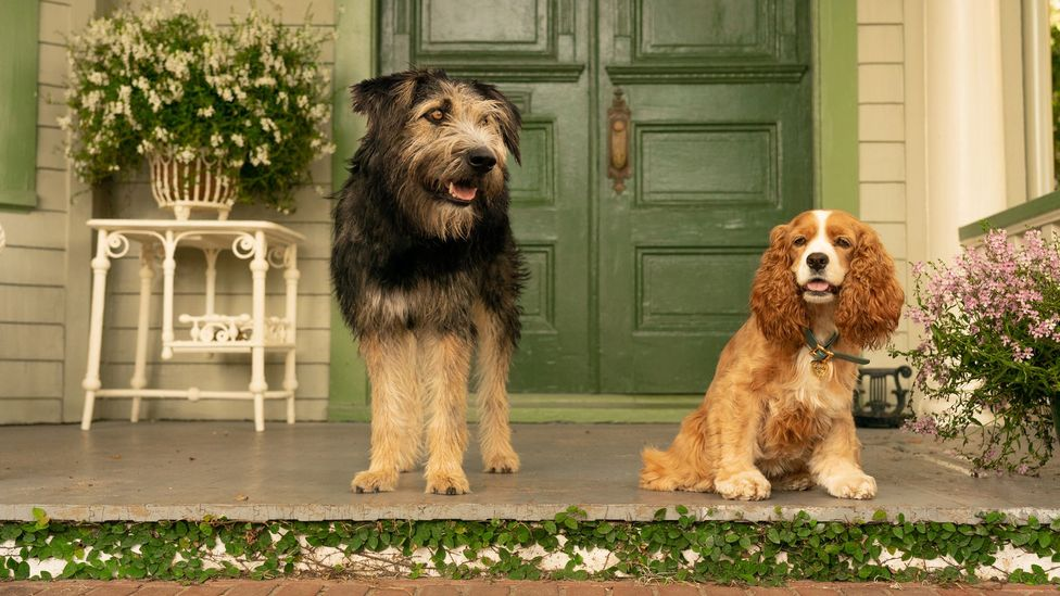 The Disney+ launch roster also includes a live-action remake of Lady and the Tramp (Credit: Disney)