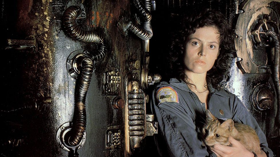 In Alien, the ship's cat stares down a xenomorph with little more than a growl and a hiss (Credit: Alamy)
