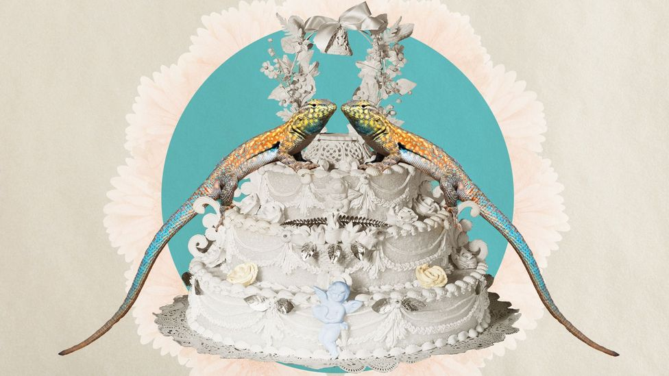 A lizard-couple on a wedding cake (Credit: Getty Images/ Alamy/ Javier Hirschfeld)