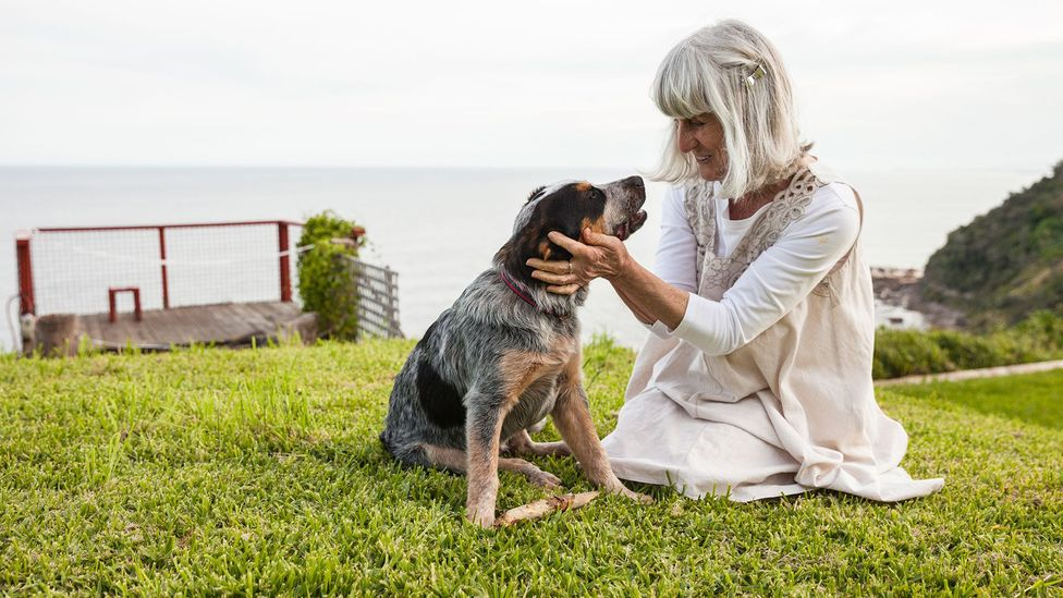 New insights into how dogs age suggest our pets move into middle age more rapidly than most owners might suspect (Credit: Getty Images)