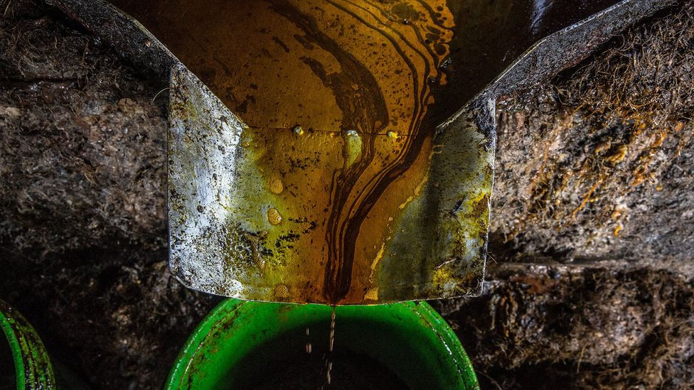 Palm oil, produced by pressing the palm kernels, is a wonder product used in food, cosmetics and for fuels, but it brings a serious environmental toll (Credit: Getty Images)