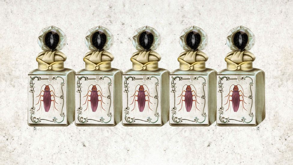 Thai speakers have many more words for odours than European languages, including a word for the odour of cockroaches (Credit: Getty Images/Javier Hirschfeld)