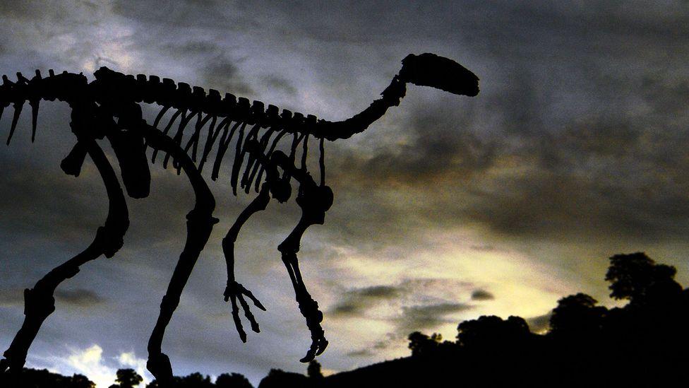 A dinosaur skeleton (Credit: Getty Images)