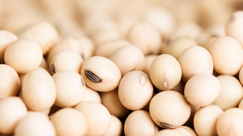 Os vegetarianos não têm deficiências de proteínas porque muitos alimentos vegetais contêm proteínas (Crédito: Getty Images)