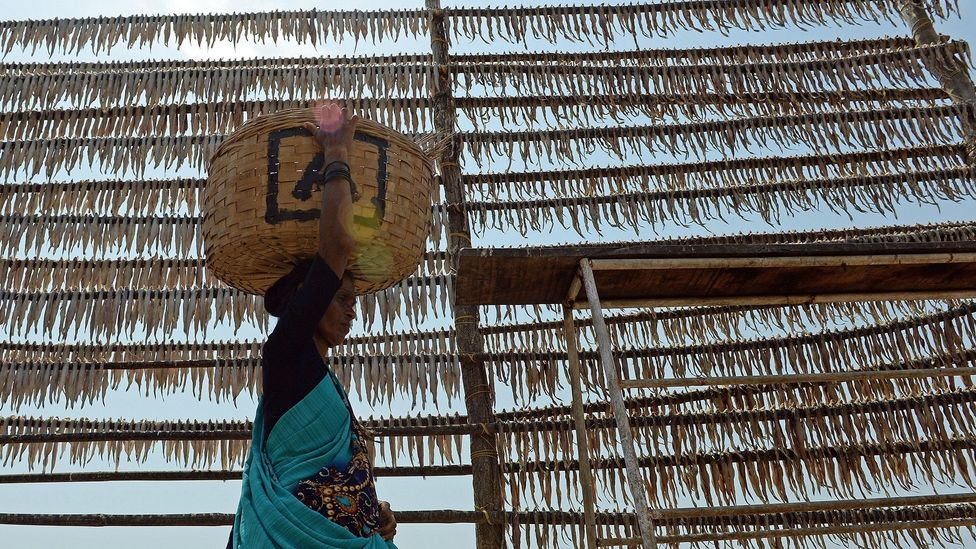 For hundreds of years, Koli fishermen have pegged Bombay duck on large racks by the sea to dry them in the sun (Credit: Indranil Mukherjee/Getty Images)