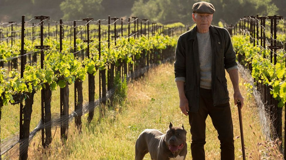 In the new series, a 94-year-old Picard is retired, living in a vineyard, and unable to come to terms with his apparent aimlessness (Credit: Alamy)
