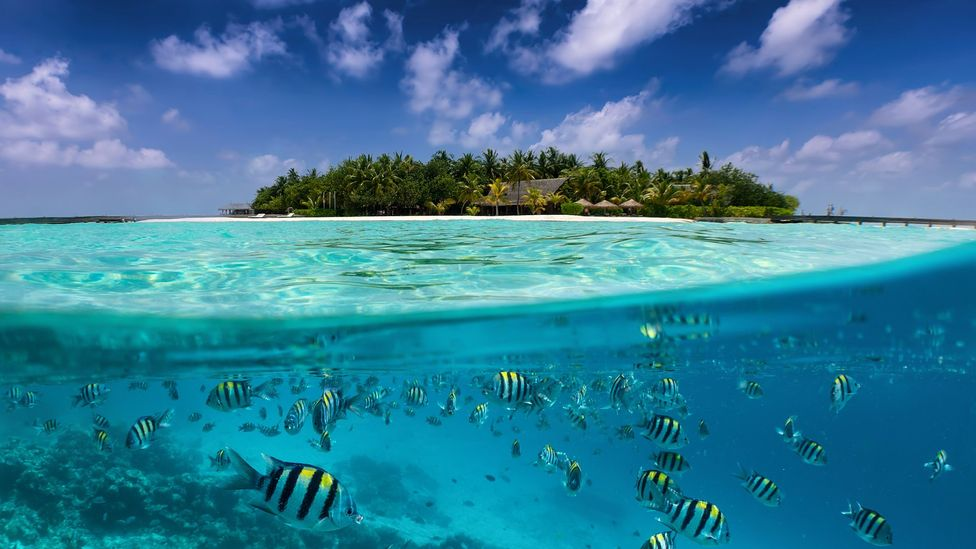 Ciguatera is particularly common in tropical climates where coral reefs are prevalent (Credit: SHansche/Getty Images)
