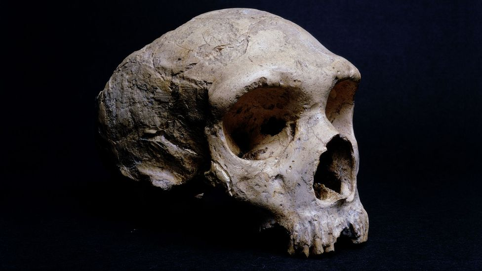 The fossilised skull of a Neanderthal found on Gibraltar is displayed at the Natural History Museum in London (Credit: Getty Images)