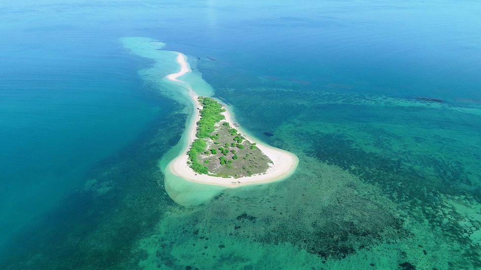 For years marine biologists have been working to save Vaan Island in India's Gulf of Mannar from sinking, due to rising sea levels and overfishing (Credit: SDMRI)