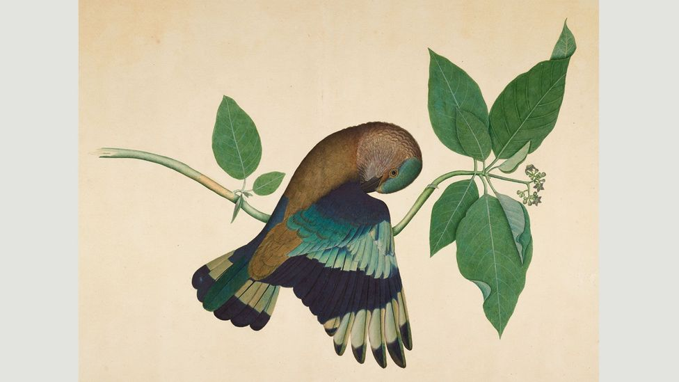 Indian Roller on Sandalwood Branch (1779) by Shaikh Zain ud-Din, who combined the style of English botanical illustration with the Mughal artistic tradition