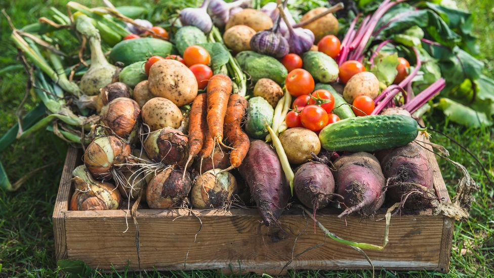 Brightly coloured fruits and vegetables tend to contain the most antioxidants, because the compounds are often pigmented (Credit: Getty Images)