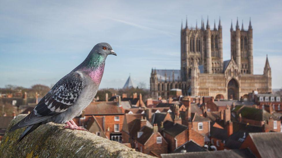 Does city life make animals smarter?