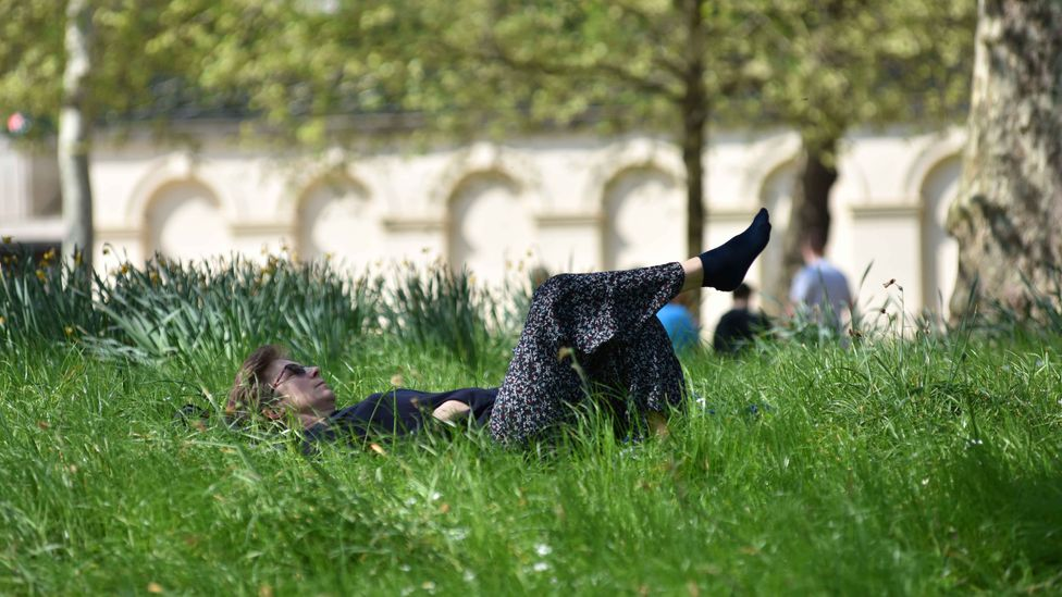 More green spaces in general can help with air pollution in cities, including plants other than trees in parks and gardens (Credit: Getty Images)